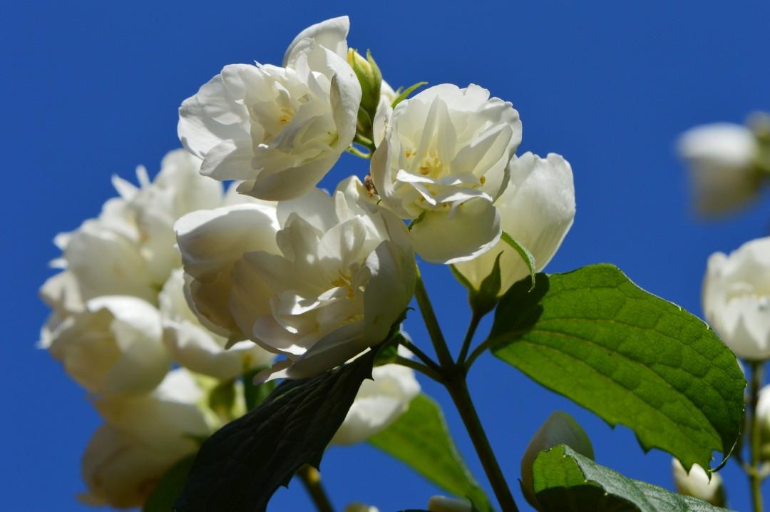 flower-800543_1920