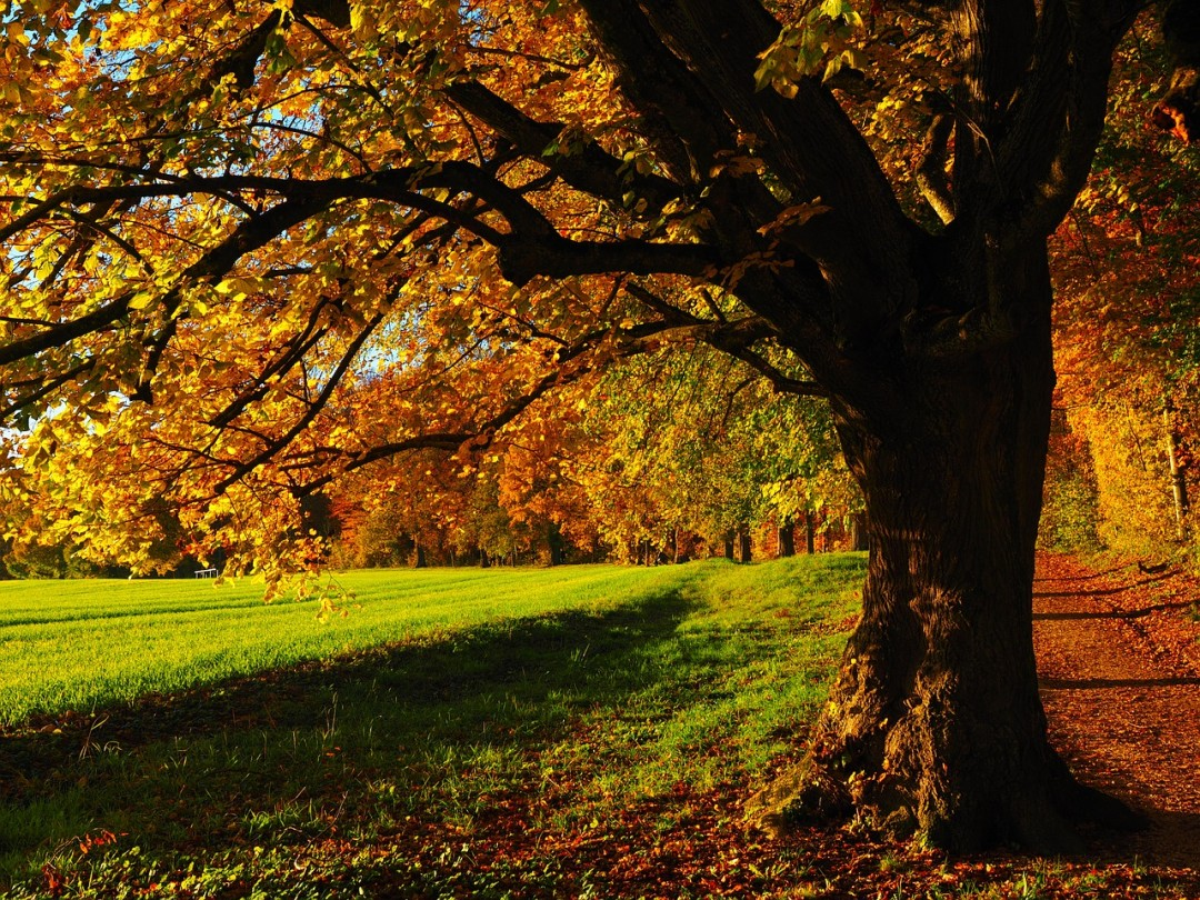 tree-779825_1280