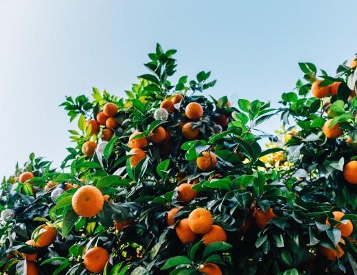 tangerines-1208301_1280 (1)