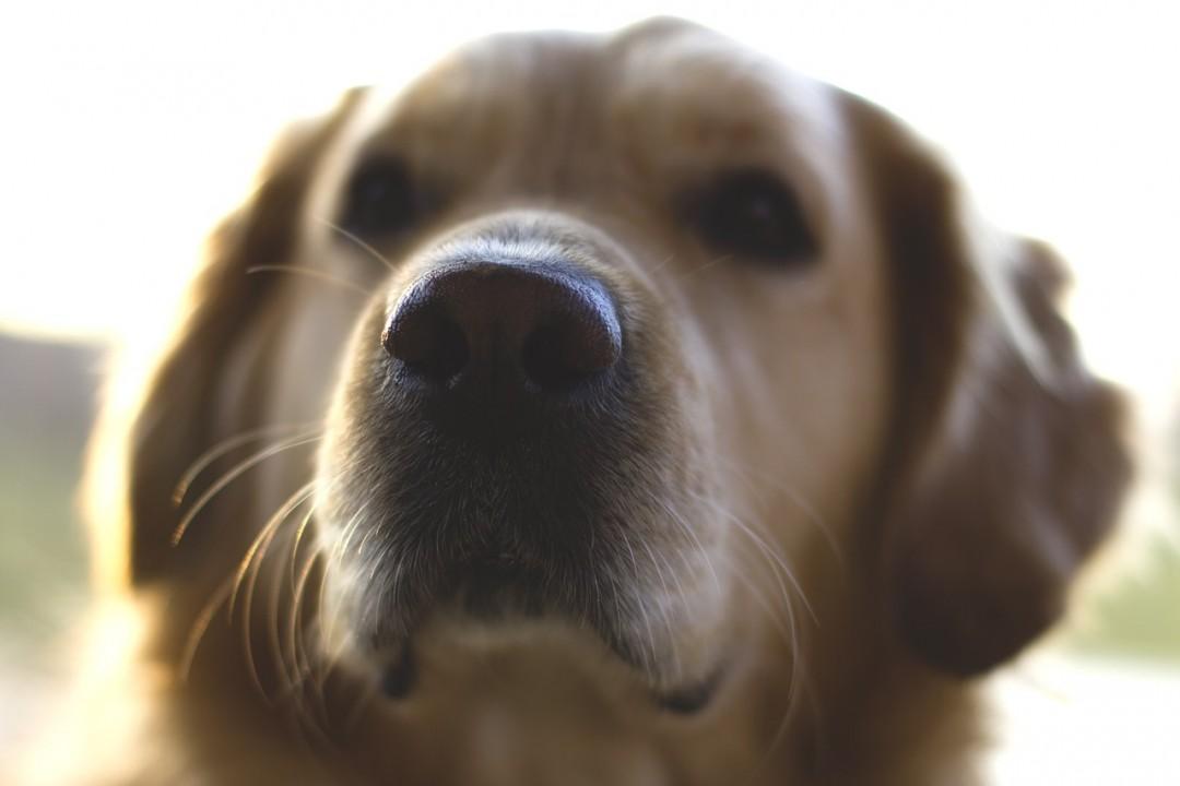 dog-1283924_1280